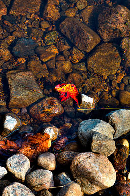 Moose In Water Photograph - Autumn On The Shore by David Patterson