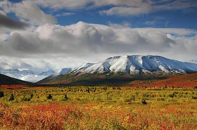 Autumn On The Taiga, Denali National Print by Michel Hersen