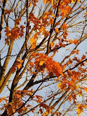 Autumn Orange Print by Guy Ricketts