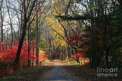 Photograph - Autumn Paths    No.2 by Neal Eslinger
