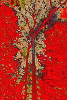 Branches Photograph - Autumn Reds by David Patterson