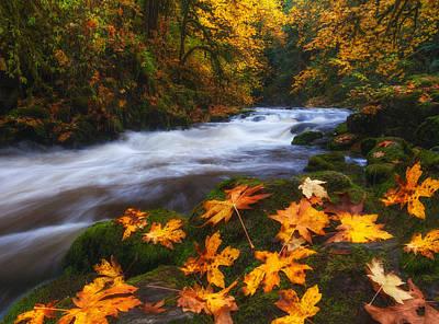 Autumn Returns Print by Darren  White
