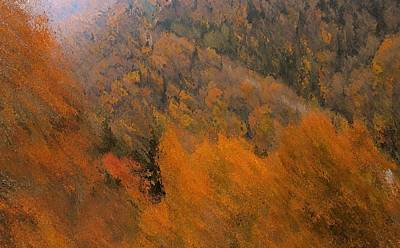 The Trees Mixed Media - Autumn Rush by Dan Sproul