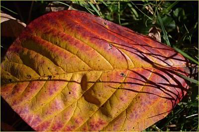 Pause Photograph - Autumn Saga by Sonali Gangane