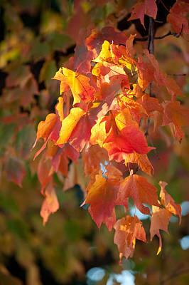 Leave Photograph - Autumn by Sebastian Musial