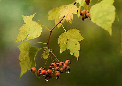 Autumn Foliage Photograph - Autumn Showers by Fraida Gutovich