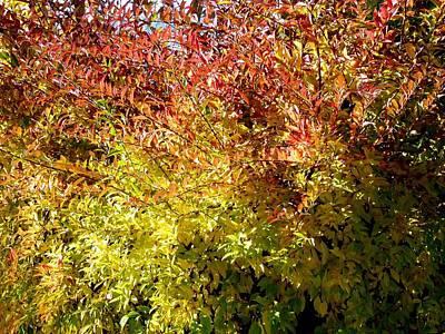 Autumn Splendor 12 Print by Will Borden