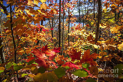 Canadian Landscape Photograph - Autumn Splendor by Elena Elisseeva