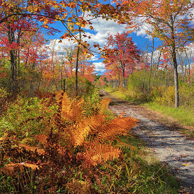 Autumn Splendor Square Print by Bill Wakeley