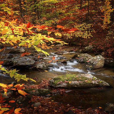 Rural Landscape Photograph - Autumn Stream Square by Bill Wakeley