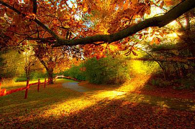 Autumn Stroll Print by Phil Koch