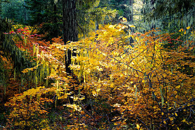 Autumn Sunbeam In The Forest - Kittitas County - Washington - October 2013 Print by Steve G Bisig