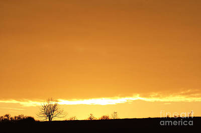 Autumn Sunset With Solitary Tree Print by Michal Boubin