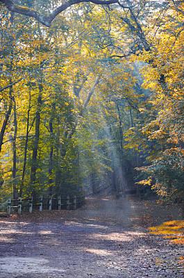Sun Rays Digital Art - Autumn Sunshine by Bill Cannon
