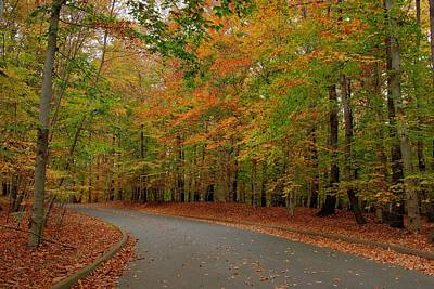 Autumn To The Left - Holmdel Park Print by Angie Tirado
