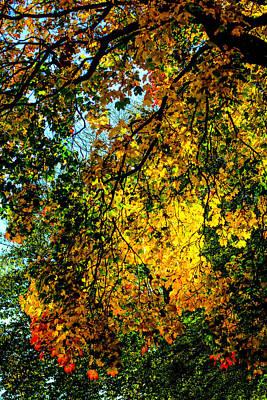 Park Scene Mixed Media - Autumn Tree  by Toppart Sweden