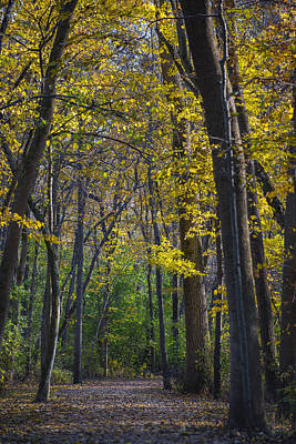Autumn Trees Alley Print by Sebastian Musial