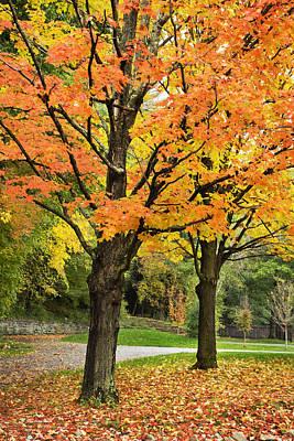 Autumn Trees Print by Christina Rollo