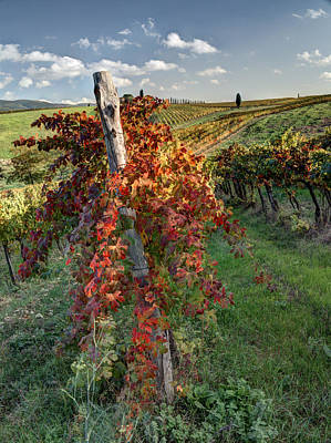 Autumn Vines Print by Eggers   Photography