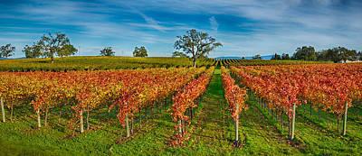 Napa Photograph - Autumn Vineyard At Napa Valley by Panoramic Images