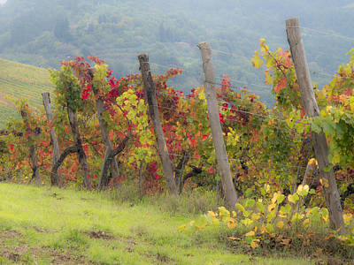 Autumn Vineyard Print by Eggers   Photography