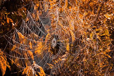 Autumn Web Print by Brian Stevens