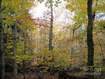 Autumn Woods Print by Linda Marcille