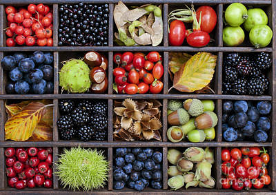Grid Photograph - Autumnal Harvest by Tim Gainey