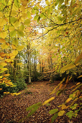 Autumnal Woodland V Print by Natalie Kinnear