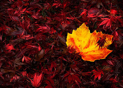 Autumn's Fallen Leaves Print by Kasandra Sproson