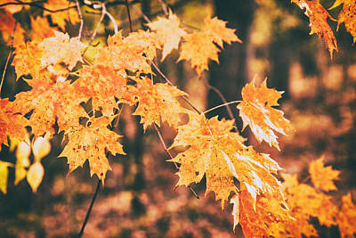 Of Autumn Photograph - Autumns Patience by Karol Livote