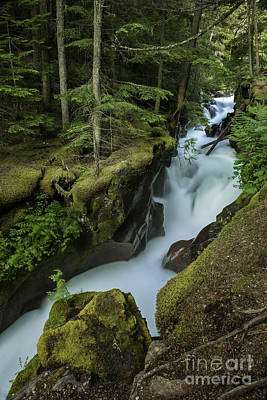Avalanche Creek Under The Giant Cedars Print by Thomas Schoeller