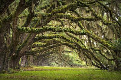 Avenue Of Oaks - Charleston Sc Plantation Live Oak Trees Forest Landscape Print by Dave Allen