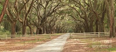 Georgia Plantation Photograph - Avenue Of The Oaks Road by Adam Jewell