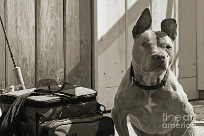 House Pet Photograph - Avery by Cindi Ressler