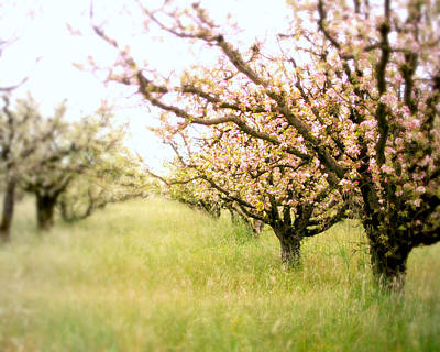 Fruit Tree Art Photograph - Awakening by Lupen  Grainne