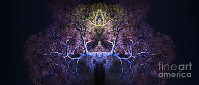 Tree Spirit Photograph - Awakening by Tim Gainey