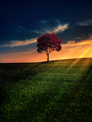 Grass Digital Art - Awesome Solitude by Bess Hamiti