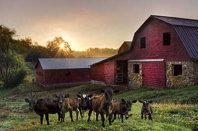 Babies On The Farm Print by Debra and Dave Vanderlaan