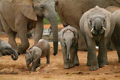 Baby African Elephants Print by Bruce J Robinson