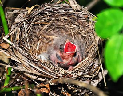 Baby Bird Digital Art - Baby Bird In Nest by Chris Flees