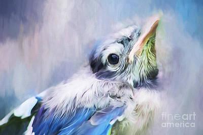 Cute Bird Photograph - Baby Blue Jay by Darren Fisher