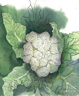 Cauliflower Painting - Baby Cauliflower by Maria Hunt
