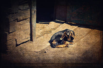 Friendly Digital Art - Baby Goat Taking A Nap I by Maria Angelica Maira