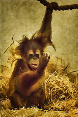 Orangutan Digital Art - Baby Orangutan At The Denver Zoo by Priscilla Burgers