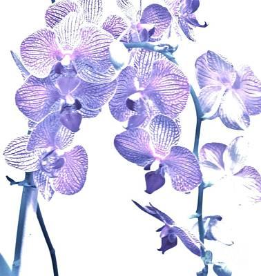 Wrap Digital Art - Baby Purple Orchids by Marsha Heiken