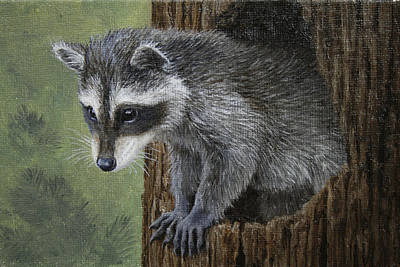 Baby Raccoon Original by Crista Forest