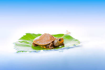 Small Turtle Photograph - Baby Turtle On A Leaf by Alexey Stiop
