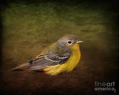Warbler Photograph - Baby Warbler by Jai Johnson