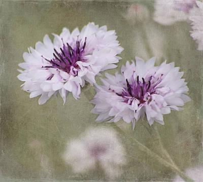 Garden Flowers Photograph - Bachelor Buttons - Flowers by Kim Hojnacki